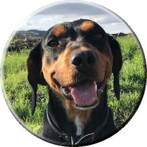 Шушка - собака Джерарда Батлера, родом из Болгарии