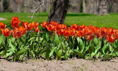 Университетский ботанический сад Екопарк Варны