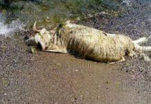 Ужасные находки на пляжах Варны