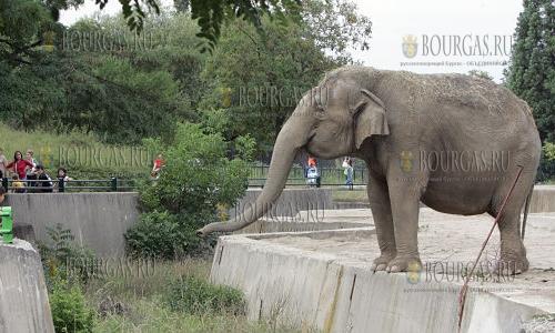 В зоопарке Софии появится еще один слон