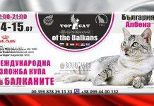 В Албене пройдет Международная выставка кошек – TOP CAT on the Balkans