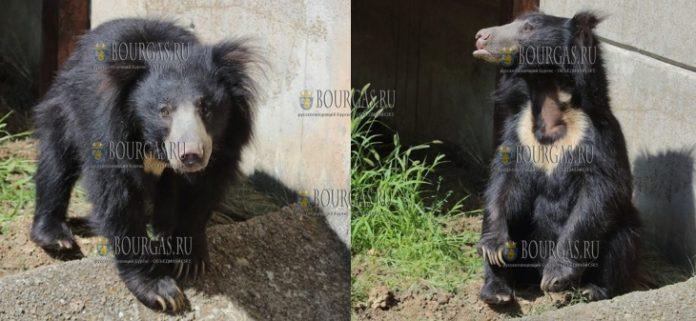 В Софийском зоопарке появился свой медведь Балу