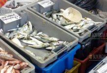 цены на рыбу в Бургасе ноябрь 2018