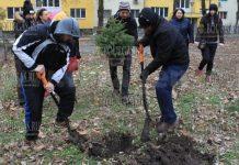 В Бургасе появится Рождественский бор