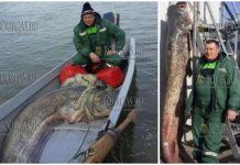 В Дунае у болгарских берегов поймали 2,5 метрового сома