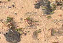 В море и на пляжах в районе приморского курорта Шабла в Болгарии появился мазут