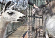 В Зоопарке Хасково появились два новых питомца