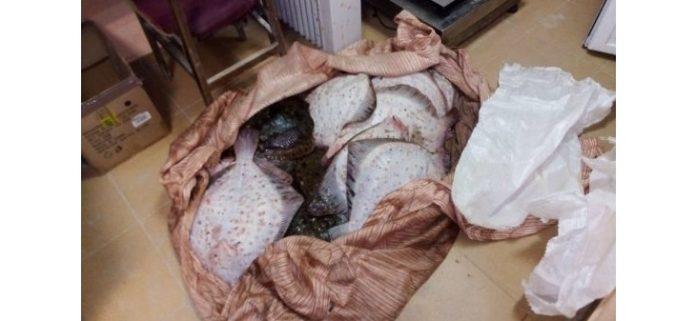 На Северо-Востоке Болгарии задержали браконьеров