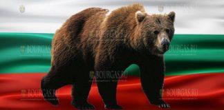 Браконьеры в Болгарии застрелили бурого медведя