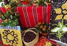 Фестиваль черешни в Кюстендиле