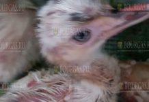 В зоопарке Бургаса пополнение - птенцы страусов Нанду