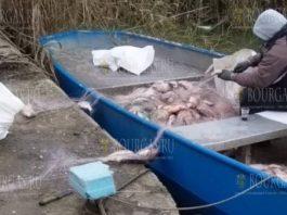 На озере Мандра в Бургасе нашли около полукилометра браконьерских сетей
