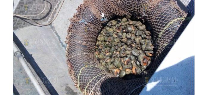 В районе Приморско обнаружены снасти для вылова белой мидии