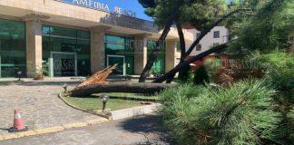 На Солнечном берегу упало 10-метровое дерево