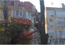 """В Варне, в районе """"Приморски"""" ликвидировали опасные деревья"""