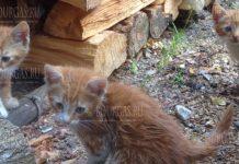 Кто убивает массовых кошек в Бургасе