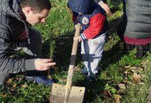 В Бургасе высадили около 100 деревьев