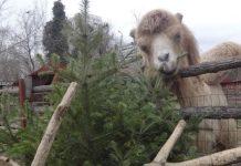 В Варне завершилась компания - Второе применение рождественских и новогодних елок