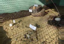 Варненский зоопарк создал специальный яичный уголок