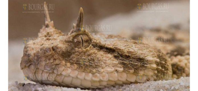 Житель Асеновграда содержит дома нескольких опасных рептилий
