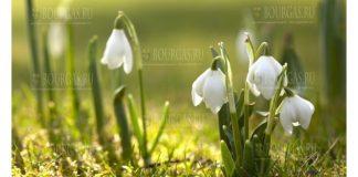 Новая неделя в Болгарии с весенними температурами