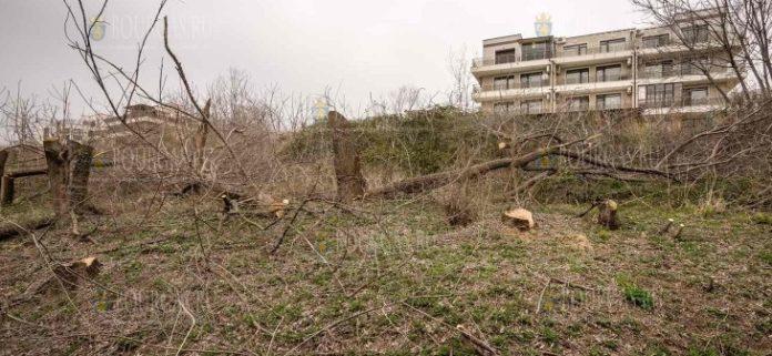 На набережной в Сарафово кто-то провел вырубку