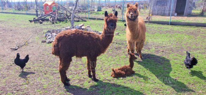 В зоопарке Бургаса двойное пополнение