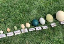 Бургасский зоопарк показал впечатляющую коллекцию яиц