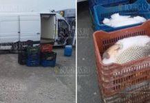 В Бургасе изъято более 300 килограммов рыбы и рыбной икры