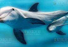 Дельфины наслаждаются чистыми водами Черного моря в Болгарии