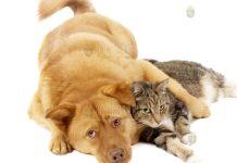 кошки и собаки в Болгарии