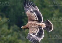 орел могильник в Болгарии
