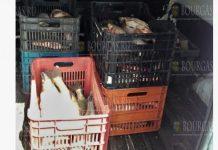 В Бургасе остановили микроавтобус с 200 килограммами незаконно выловленной рыбы
