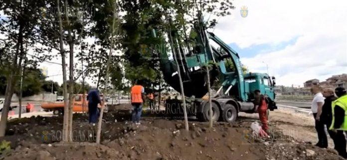 В Варне высаживают новые деревья