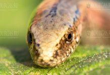 Змея испугала женщину в Асеновграде