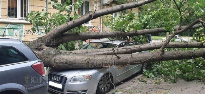 последствия бури в Софии