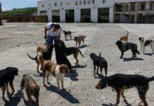 Проблема с бродячими собаками в Варне решена