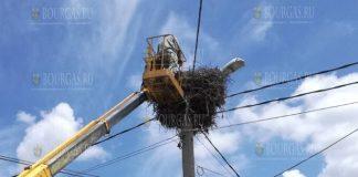 В Нова Загоре спасли гнездо аистов