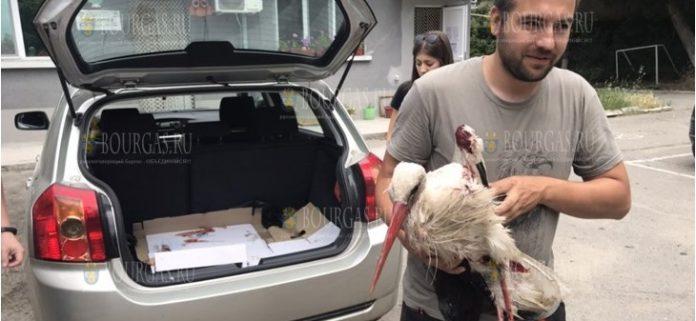 Защитники природы в Болгарии спасли аиста