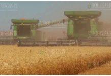 зерновые в Болгарии