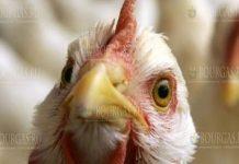 болезнь Ньюкасла у кур в Болгарии