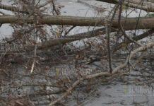 Буря повалило дерево на оживленной улице в Благоевграде