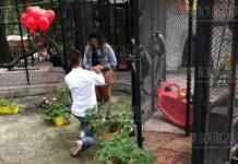 Мужчина сделал предложение о женитьбе в зоопарке Варны