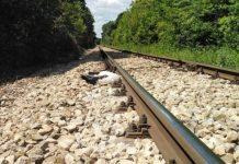 На железнодорожной линии Русе-Варна нашли двенадцать мертвых аистов