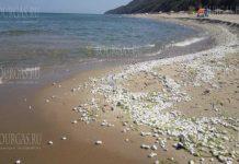 Отходы пальмового масла на пляжах в Бургасе
