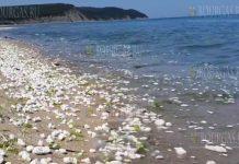 Пляжи на Южном побережье Черного моря в Болгарии оказались загрязнены пальмовым маслом