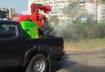 С насекомыми в Бургасе будут бороться с Lamborghini