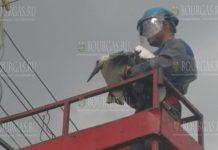 В одном из шуменских сел спасли аиста