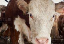 животноводческий сектор в Болгарии