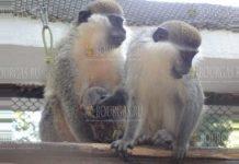 В зоопарке Варны на свет появился новый житель